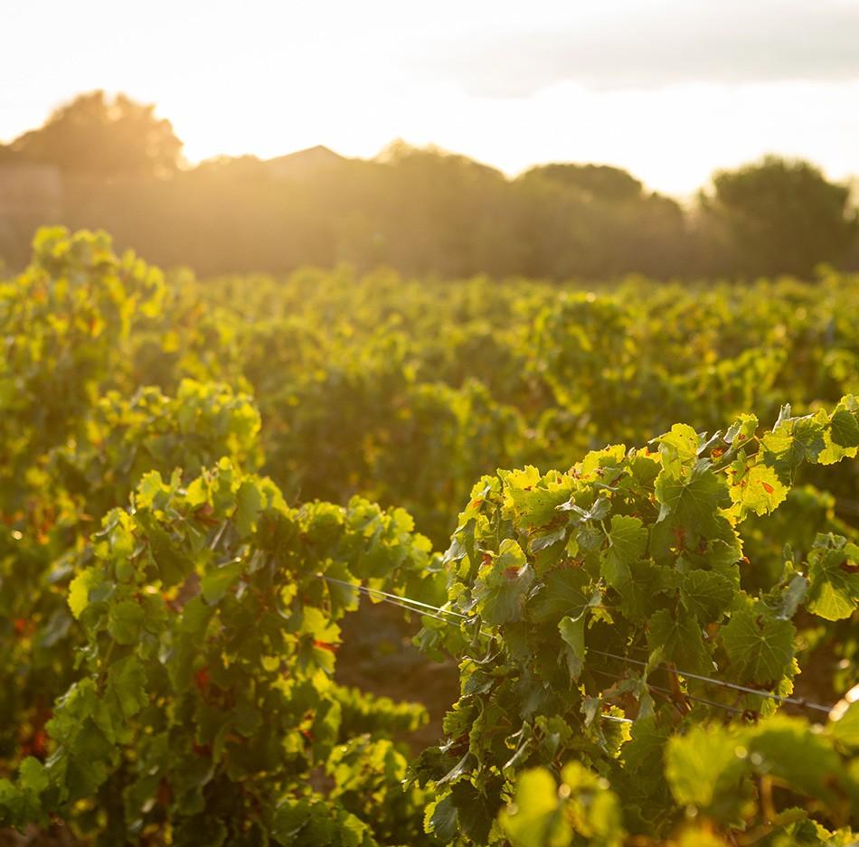 Découvrez nos vins